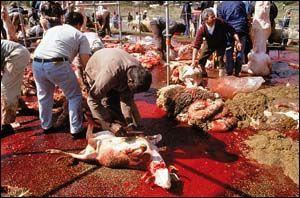 matanza-corderos.jpg