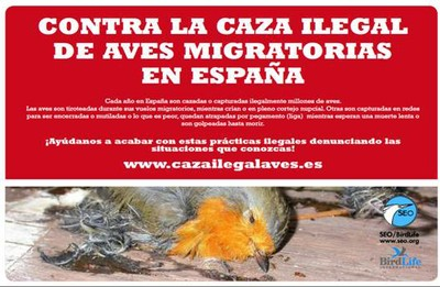 Caza Ilegal de Aves