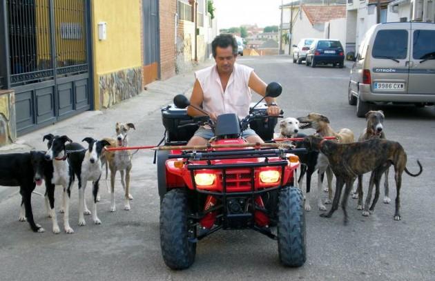 Andalucía ultima la legalización de los entrenamientos de galgos atados a motos