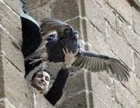 Asanda vigilará si este domingo se lanza una pava viva desde el campanario de la parroquia de Cazalilla