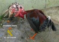 Ayuntamiento de Sanlúcar colabora con peleadores de gallos