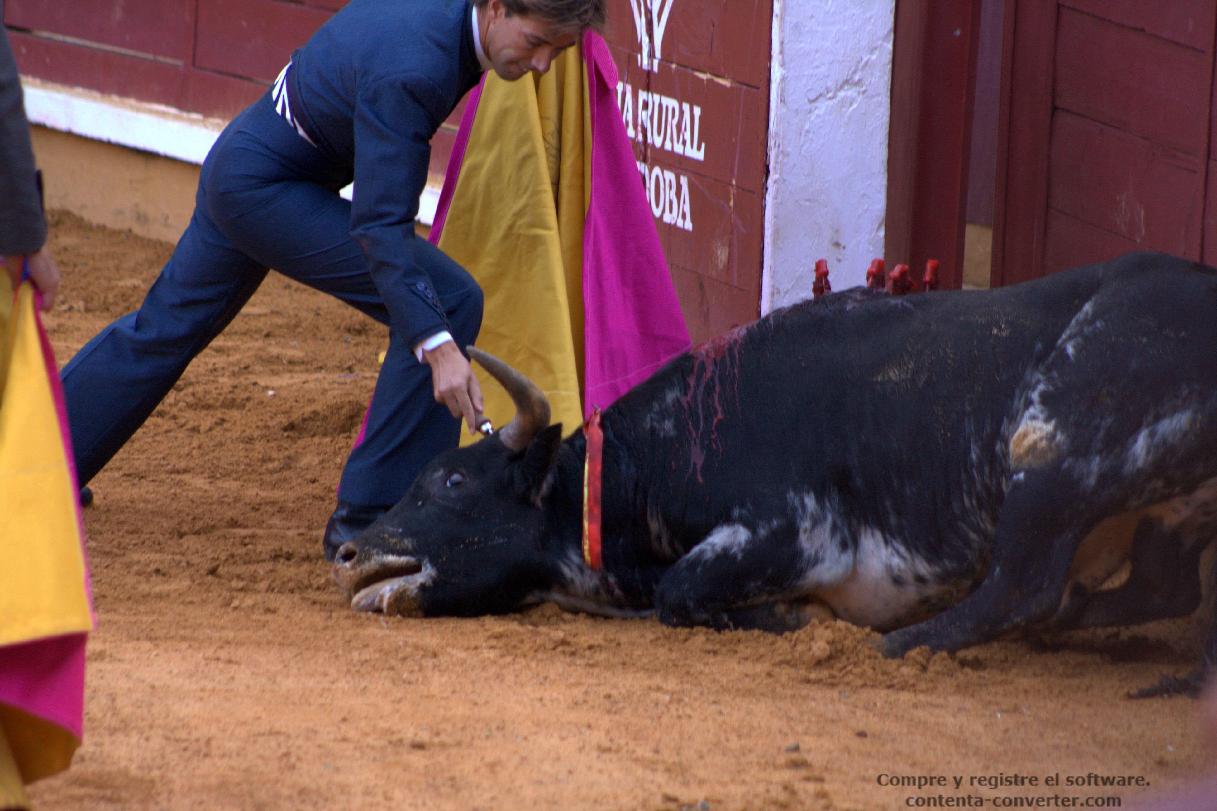 Día histórico: entra en vigor la prohibición de las corridas de toros en Cataluña.