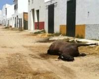 Los caballos que mueren durante la romería de El Rocío sí sufren, y mucho.