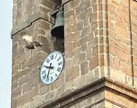 Nueva denuncia por lanzar la pava desde el campanario de Cazalilla