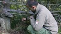 Piden pena de cárcel para un edil de Medio Ambiente por cazar con lazo