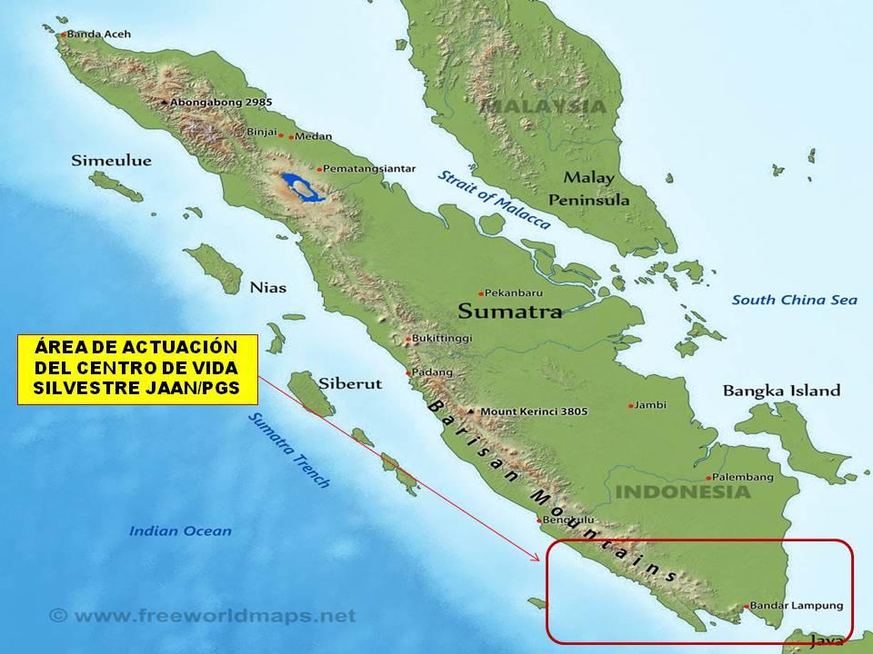 PROYECTO GRAN SIMIO COLABORA CON JAAN (YACARTA ANIMAL AID NETWORK) EN LA CONSTRUCCIÓN DE UN CENTRO DE VIDA SALVAJE AL SUR DE SUMATRA (INDONESIA)